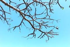 Ветвь и небо дерева Стоковая Фотография