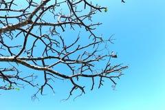 Ветвь и небо дерева Стоковые Фото