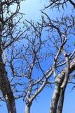 Ветвь и небо дерева Стоковое Фото