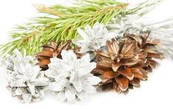 Ветвь и серебр ели с коричневыми конусами на белизне Стоковое Изображение RF