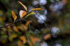 Ветвь картин и текстур на осени покрасила листья Стоковые Фото