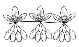 Ветвь красивой ягоды кизила, лекарственного растения Полезные вкусные ягоды для здоровья и медицины Графическое изображение r иллюстрация штока