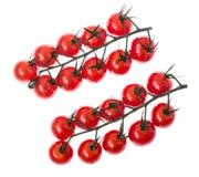 Ветвь красных зрелых томатов вишни с водой падает Стоковая Фотография RF