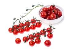 Ветвь красных зрелых томатов вишни с водой падает Стоковая Фотография