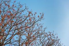 Ветвь красных цветков на предпосылке голубого неба Стоковая Фотография RF