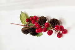 Ветвь красных ягод Стоковые Изображения RF