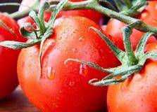 Ветвь крупного плана свежих росных томатов Стоковое Изображение RF