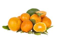 Ветвь мандаринов tangerines/на белизне Стоковое Фото