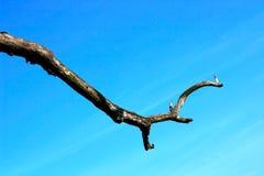 ветвь мертвая Стоковая Фотография