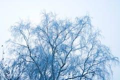 ветвь морозная стоковые фотографии rf