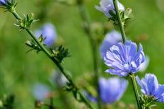 Ветвь одичалых голубых цветов Стоковая Фотография RF