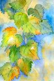 Ветвь лозы Стоковые Фото