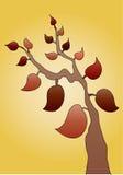 ветвь осени выходит вал Стоковое Фото