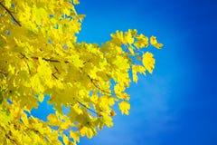 ветвь осени Стоковые Изображения