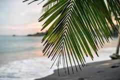 Ветвь пальмы на пляже стоковое фото rf