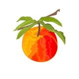 Ветвь персика с вектором листьев Стоковое Изображение