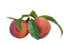 Ветвь персика Стоковое фото RF