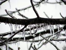 ветвь покрыла вал льда Стоковое фото RF