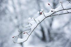 ветвь покрыла снежок собаки розовый Стоковые Фото