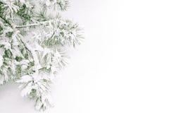 ветвь покрыла снежок Стоковые Изображения