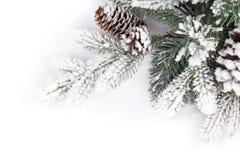 ветвь покрыла вал снежка ели Стоковые Фотографии RF