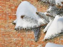 ветвь покрыла вал снежка ели Стоковое Фото