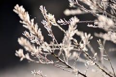ветвь покрыла вал hoarfrost Стоковые Изображения