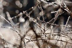 ветвь покрыла вал hoarfrost Стоковые Изображения RF