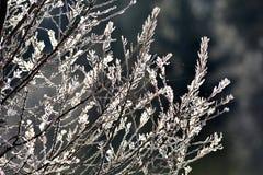 ветвь покрыла вал hoarfrost Стоковая Фотография RF