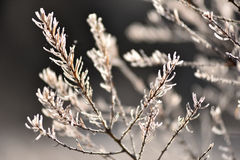 ветвь покрыла вал hoarfrost Стоковое Изображение RF
