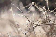 ветвь покрыла вал hoarfrost Стоковые Фотографии RF