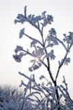 ветвь покрыла снежок Стоковые Фотографии RF