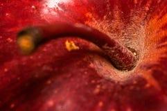 Ветвь поляка Яблока в кухне Стоковая Фотография