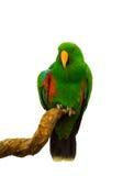 Ветвь попугая ары зеленая держа Стоковое фото RF