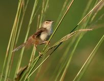 ветвь птицы одичалая Стоковые Изображения RF