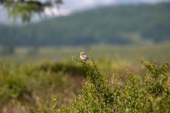 ветвь птицы Стоковые Изображения RF