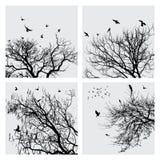 ветвь птиц Стоковое Изображение RF