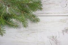Ветвь рождественской елки на предпосылке белой краски деревянной стоковое изображение
