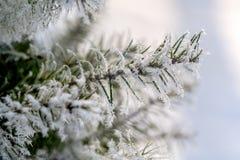 Ветвь рождественской елки с иглами в заморозке Стоковая Фотография RF