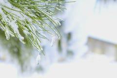 Ветвь рождества с снегом стоковое фото rf