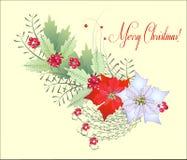 Ветвь рождества с Poinsettia Стоковые Фотографии RF