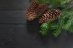 Ветвь рождественской елки с конусом стоковая фотография