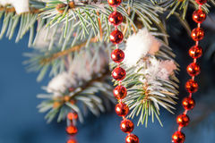 Ветвь рождественской елки с строкой красных шариков Стоковые Изображения