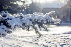 Ветвь рождественской елки Стоковые Изображения RF