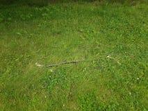 Ветвь ручки или дерева на зеленой траве Стоковые Фотографии RF