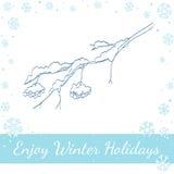 Ветвь рябины зимы также вектор иллюстрации притяжки corel Стоковые Изображения