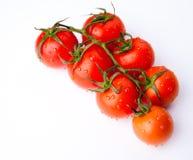 Ветвь свежих росных томатов Стоковые Изображения RF