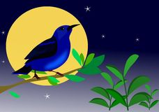 ветвь сини птицы предпосылки Стоковая Фотография