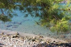 Ветвь сосенки над морской водой. Стоковое фото RF