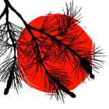 Ветвь сосны и большое красное солнце Стоковое Изображение RF